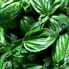 herbal pharma
